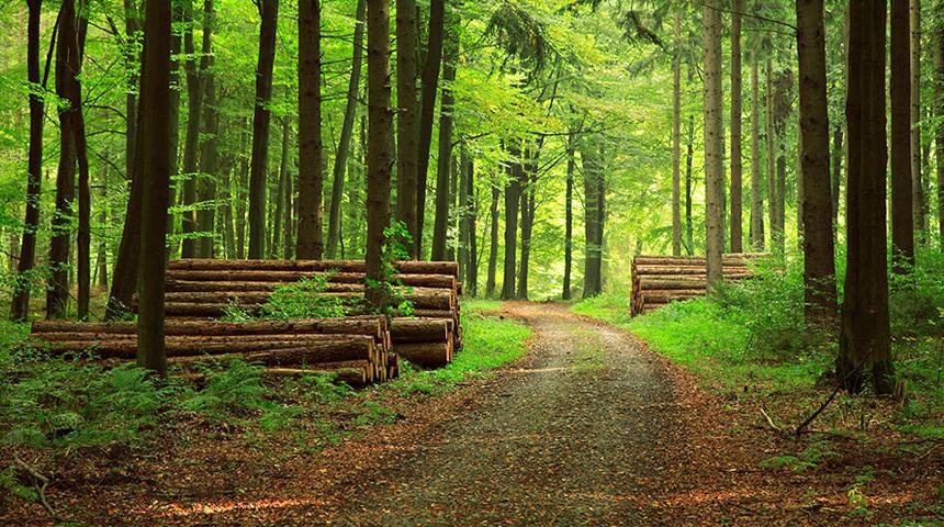 Obsah obrázku tráva, exteriér, les, zelená  Popis byl vytvořen automaticky